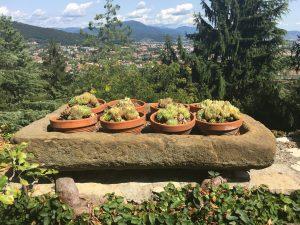 Cosa vedere a Bergamo Alta in un giorno
